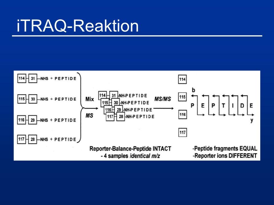 iTRAQ-Reaktion