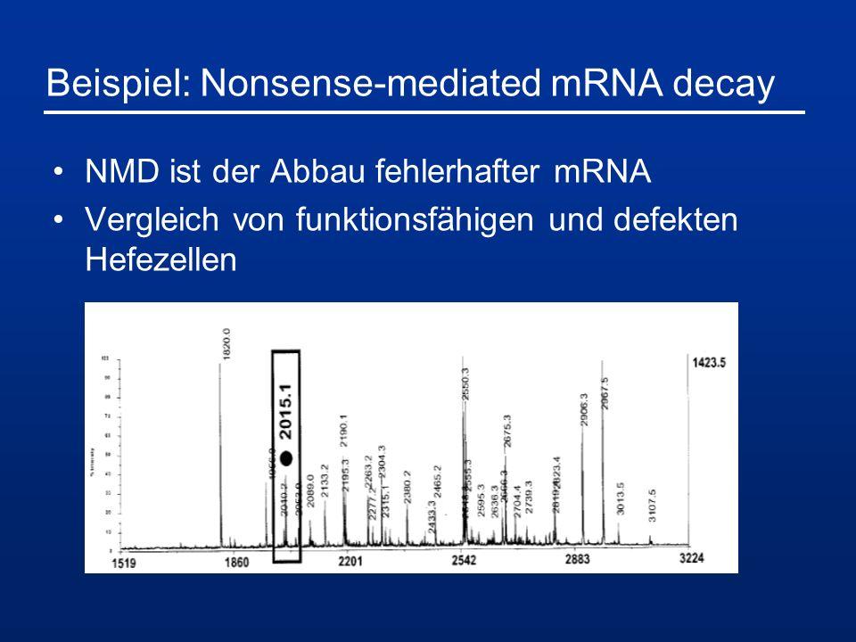 Beispiel: Nonsense-mediated mRNA decay NMD ist der Abbau fehlerhafter mRNA Vergleich von funktionsfähigen und defekten Hefezellen