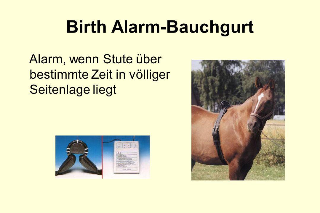 Birth Alarm-Bauchgurt Alarm, wenn Stute über bestimmte Zeit in völliger Seitenlage liegt