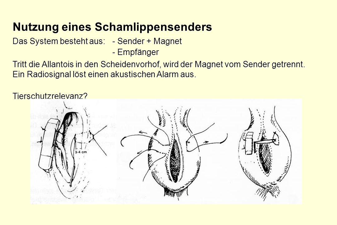 Nutzung eines Schamlippensenders Das System besteht aus: - Sender + Magnet - Empfänger Tritt die Allantois in den Scheidenvorhof, wird der Magnet vom
