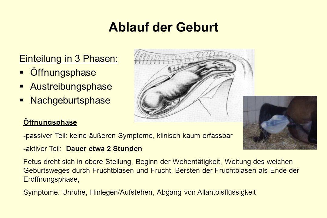 Ablauf der Geburt Einteilung in 3 Phasen: Öffnungsphase Austreibungsphase Nachgeburtsphase Öffnungsphase -passiver Teil: keine äußeren Symptome, klini