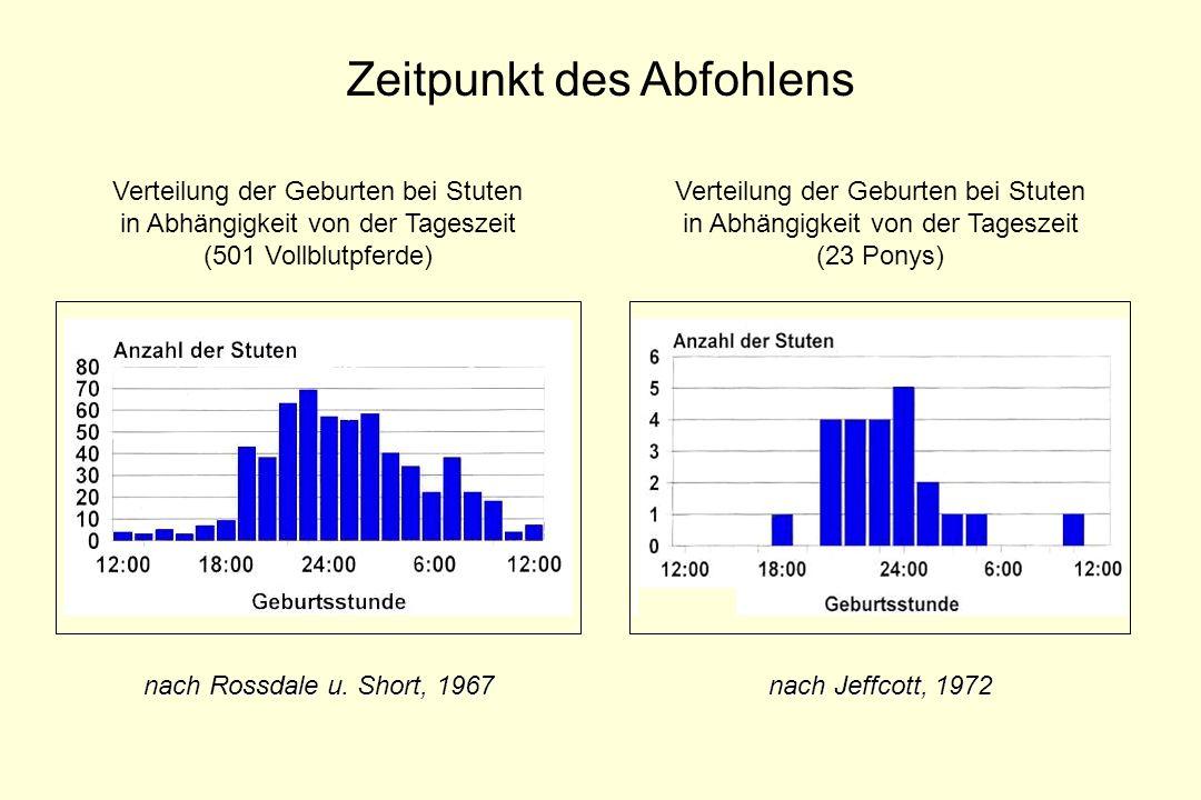 Zeitpunkt des Abfohlens Verteilung der Geburten bei Stuten in Abhängigkeit von der Tageszeit (501 Vollblutpferde) nach Rossdale u. Short, 1967 Verteil