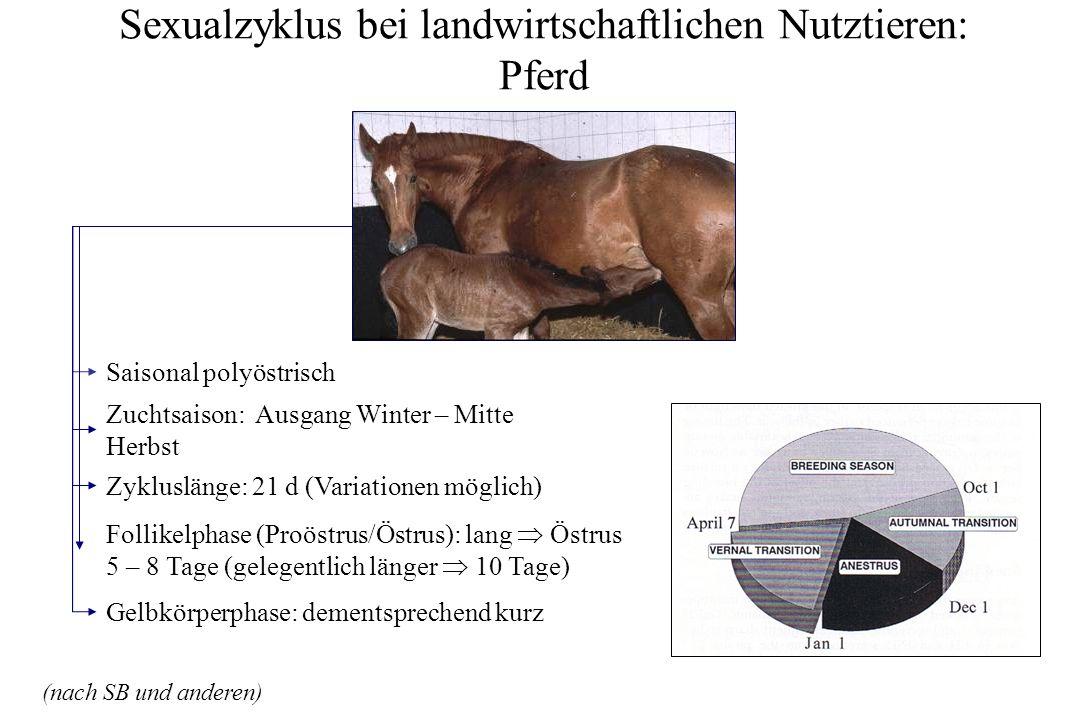 Sexualzyklus bei landwirtschaftlichen Nutztieren: Pferd Zykluslänge: 21 d (Variationen möglich) Saisonal polyöstrisch Zuchtsaison: Ausgang Winter – Mi