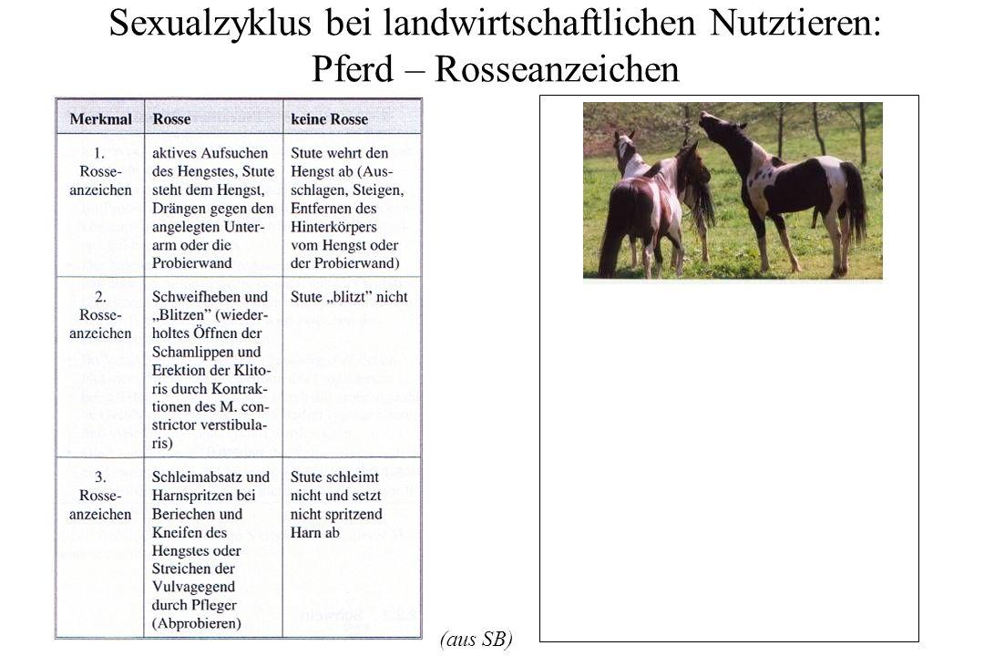 Sexualzyklus bei landwirtschaftlichen Nutztieren: Pferd – Rosseanzeichen (aus SB)