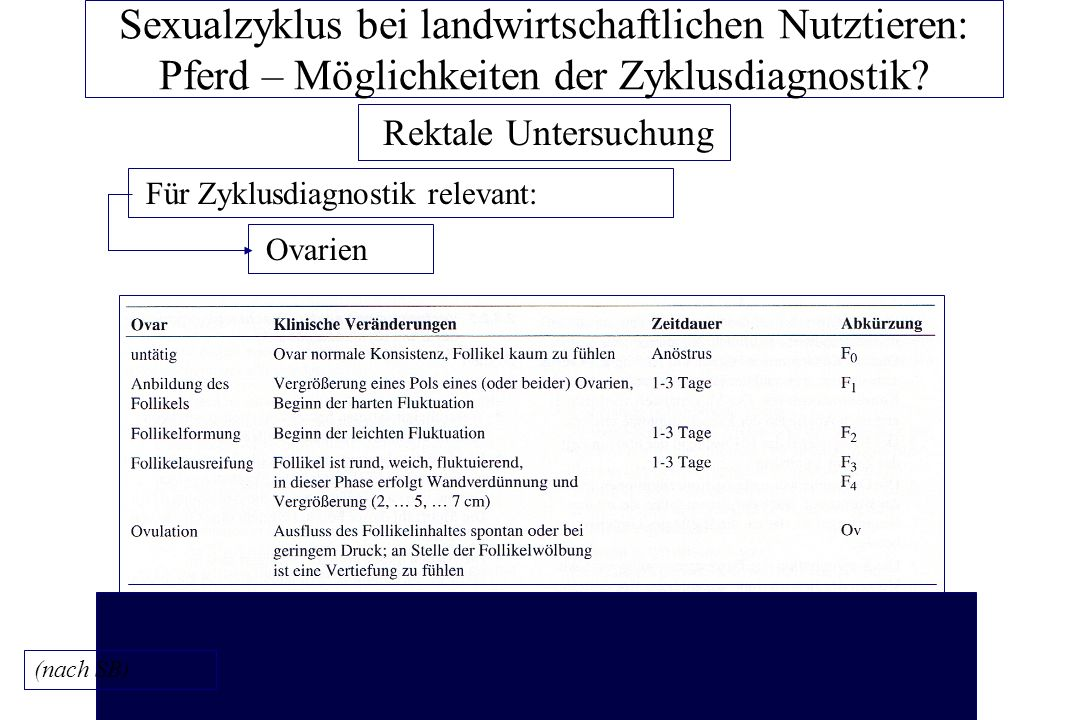 Sexualzyklus bei landwirtschaftlichen Nutztieren: Pferd – Möglichkeiten der Zyklusdiagnostik.