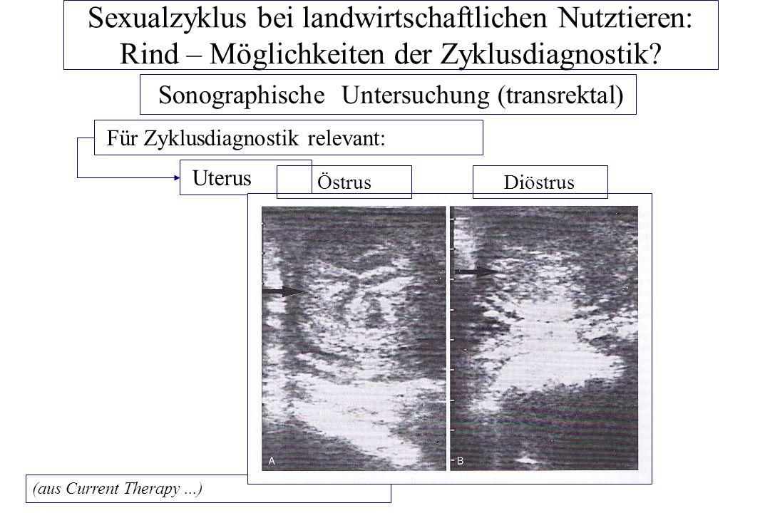 Sexualzyklus bei landwirtschaftlichen Nutztieren: Rind – Möglichkeiten der Zyklusdiagnostik? Sonographische Untersuchung (transrektal) Für Zyklusdiagn
