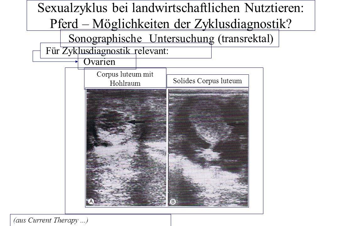 Sexualzyklus bei landwirtschaftlichen Nutztieren: Pferd – Möglichkeiten der Zyklusdiagnostik? Sonographische Untersuchung (transrektal) Für Zyklusdiag