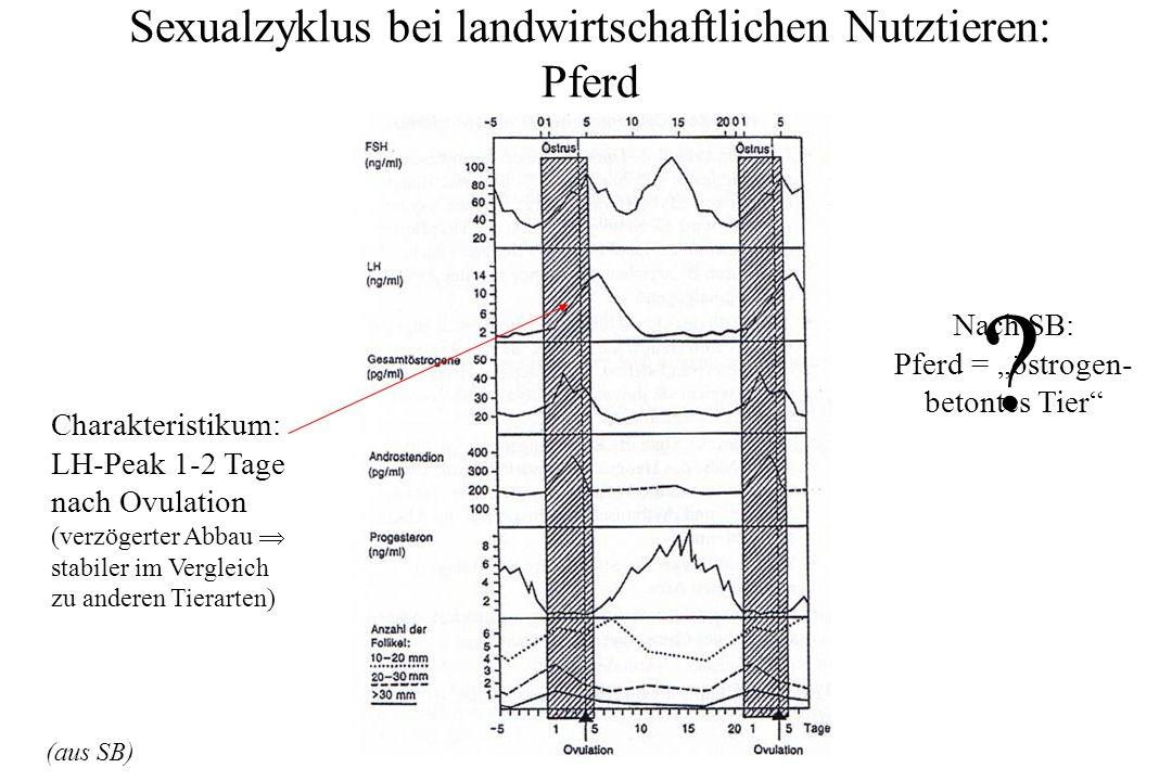 Sexualzyklus bei landwirtschaftlichen Nutztieren: Pferd (aus SB) Nach SB: Pferd = östrogen- betontes Tier ? Charakteristikum: LH-Peak 1-2 Tage nach Ov