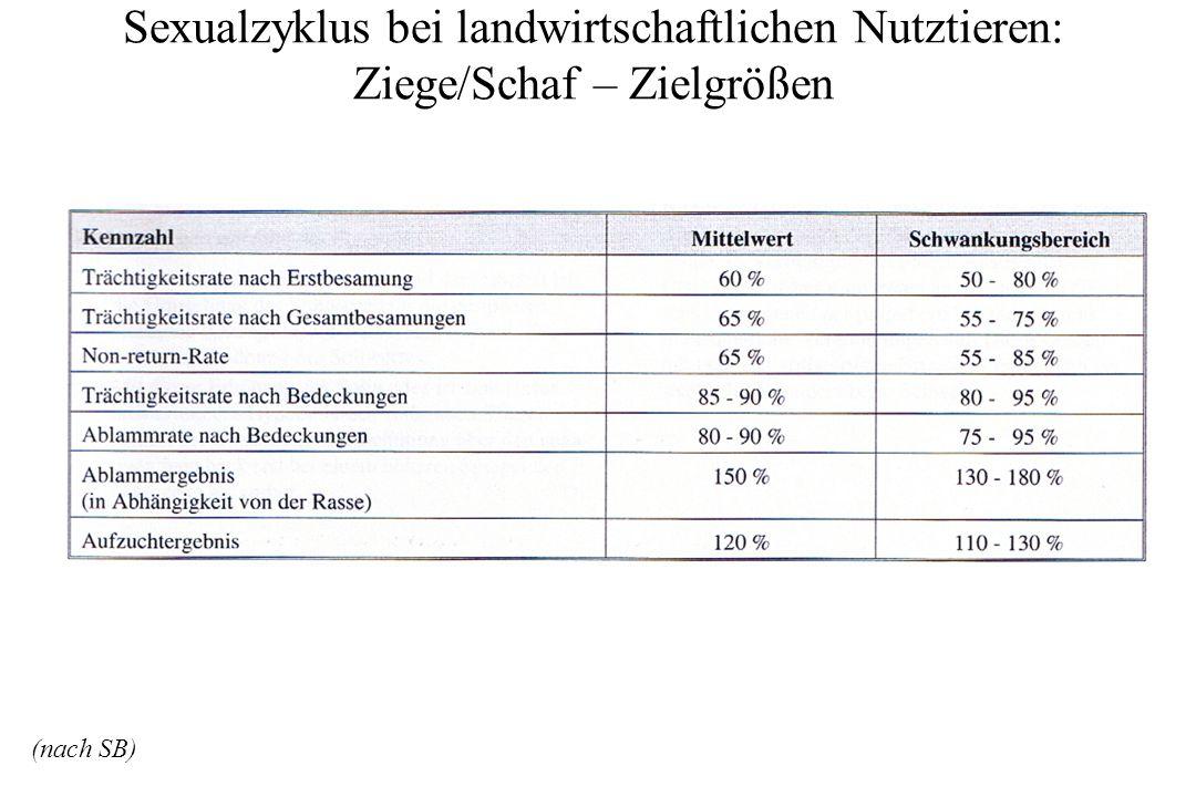 Sexualzyklus bei landwirtschaftlichen Nutztieren: Ziege/Schaf – Zielgrößen (nach SB)