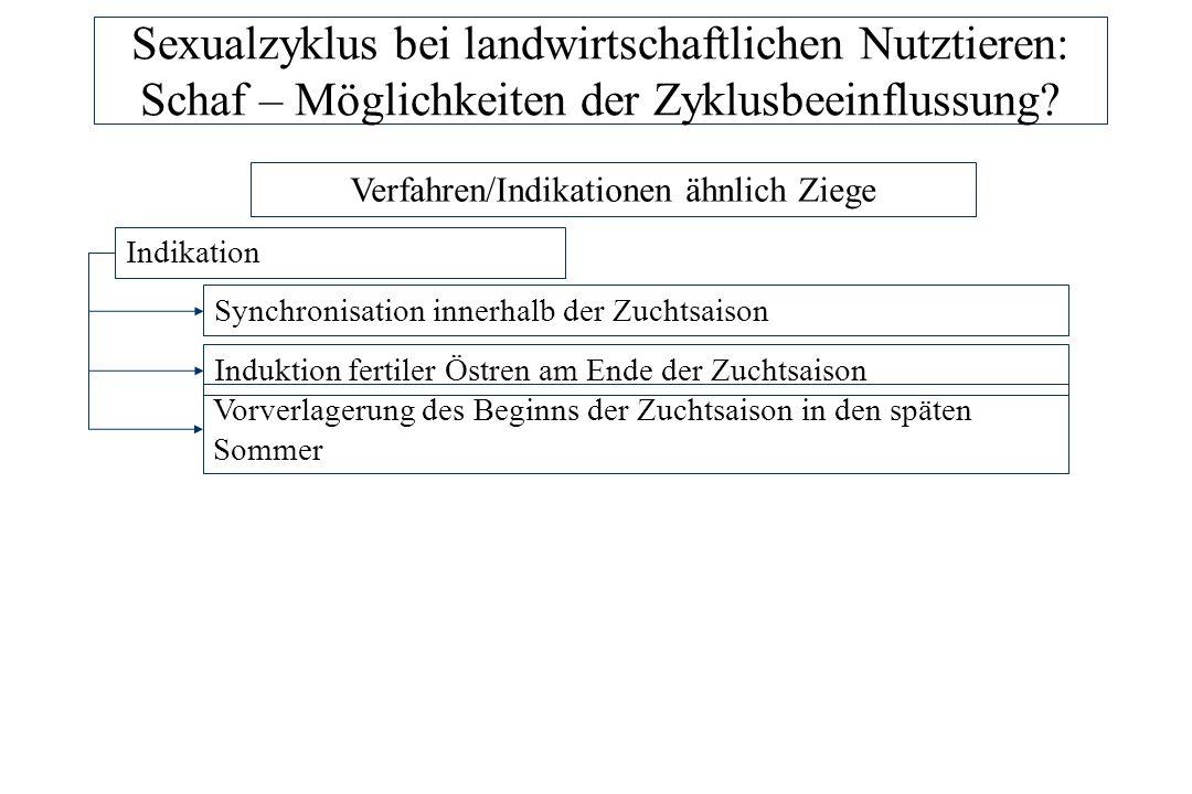 Sexualzyklus bei landwirtschaftlichen Nutztieren: Schaf – Möglichkeiten der Zyklusbeeinflussung? Verfahren/Indikationen ähnlich Ziege Indikation Synch