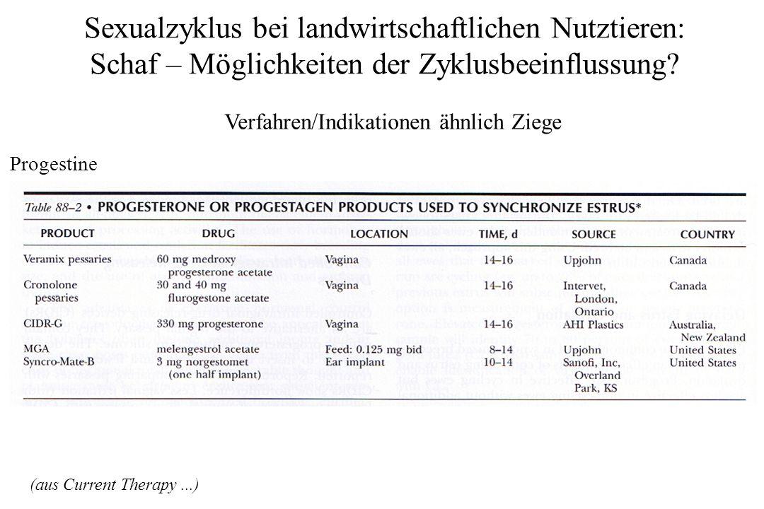 Sexualzyklus bei landwirtschaftlichen Nutztieren: Schaf – Möglichkeiten der Zyklusbeeinflussung? Verfahren/Indikationen ähnlich Ziege Progestine (aus