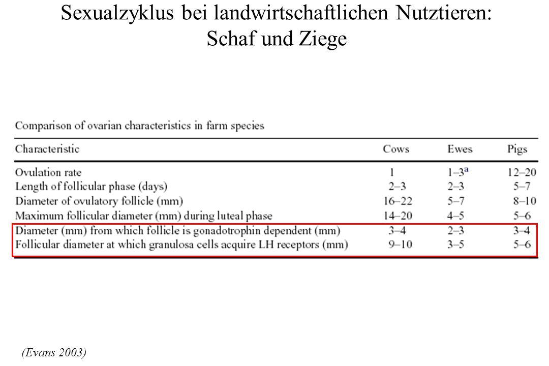 Sexualzyklus bei landwirtschaftlichen Nutztieren: Ziege – Möglichkeiten der Zyklusbeeinflussung.