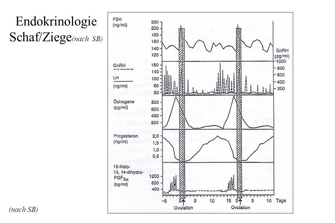 Endokrinologie Schaf/Ziege (nach SB) (nach SB)