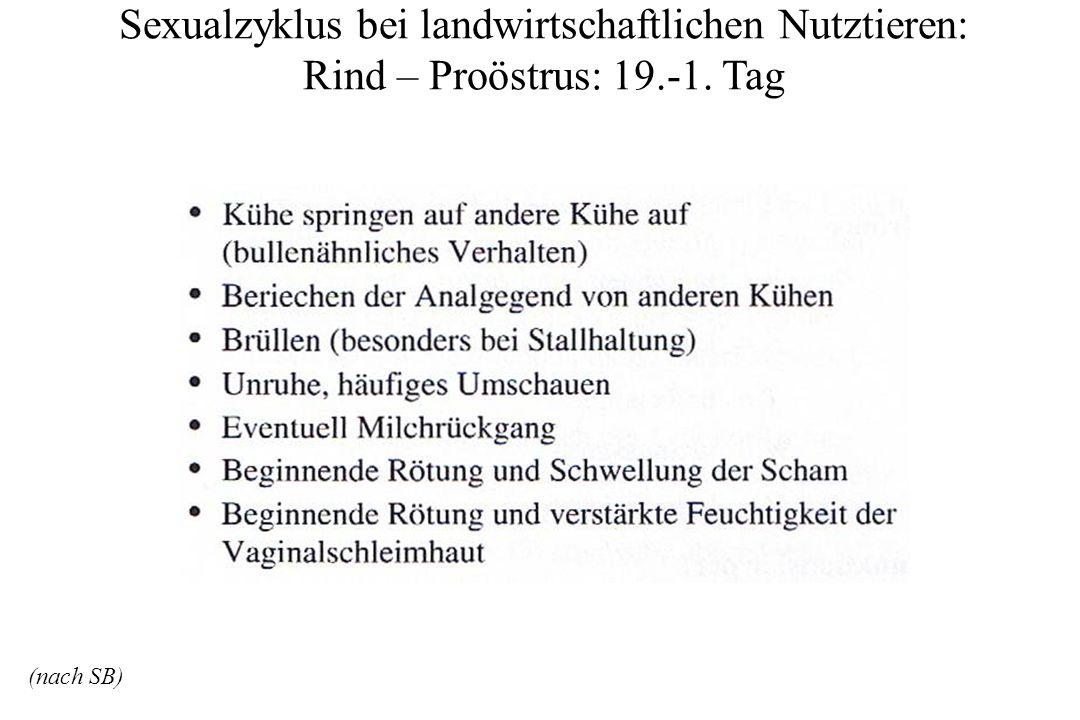 Sexualzyklus bei landwirtschaftlichen Nutztieren: Rind – Proöstrus: 19.-1.
