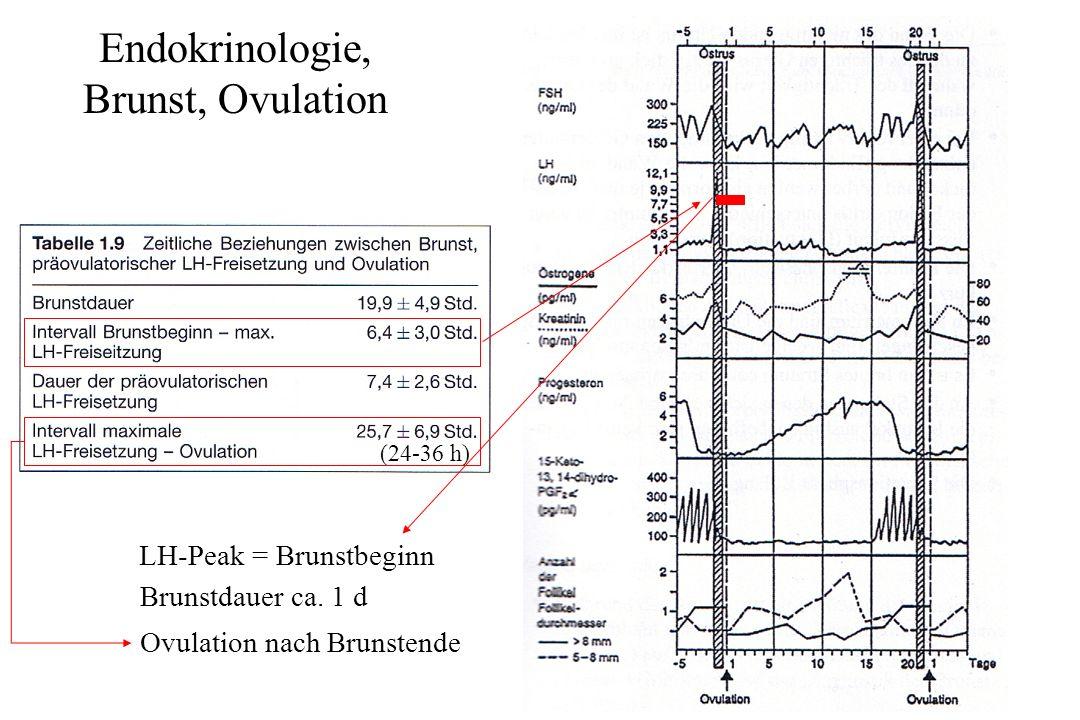 Sexualzyklus bei landwirtschaftlichen Nutztieren: Rind – Besamung (aus Fertilitätsstörungen beim weiblichen Rind) Besamungen ante ovulationem Passage weibl.