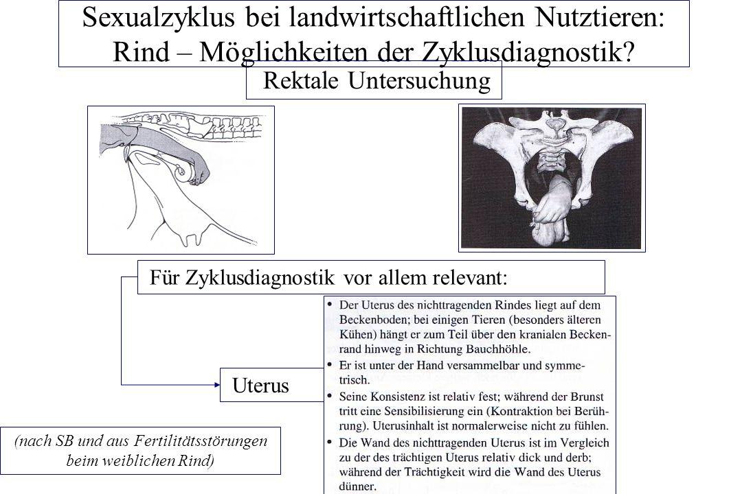 Sexualzyklus bei landwirtschaftlichen Nutztieren: Rind – Möglichkeiten der Zyklusdiagnostik.