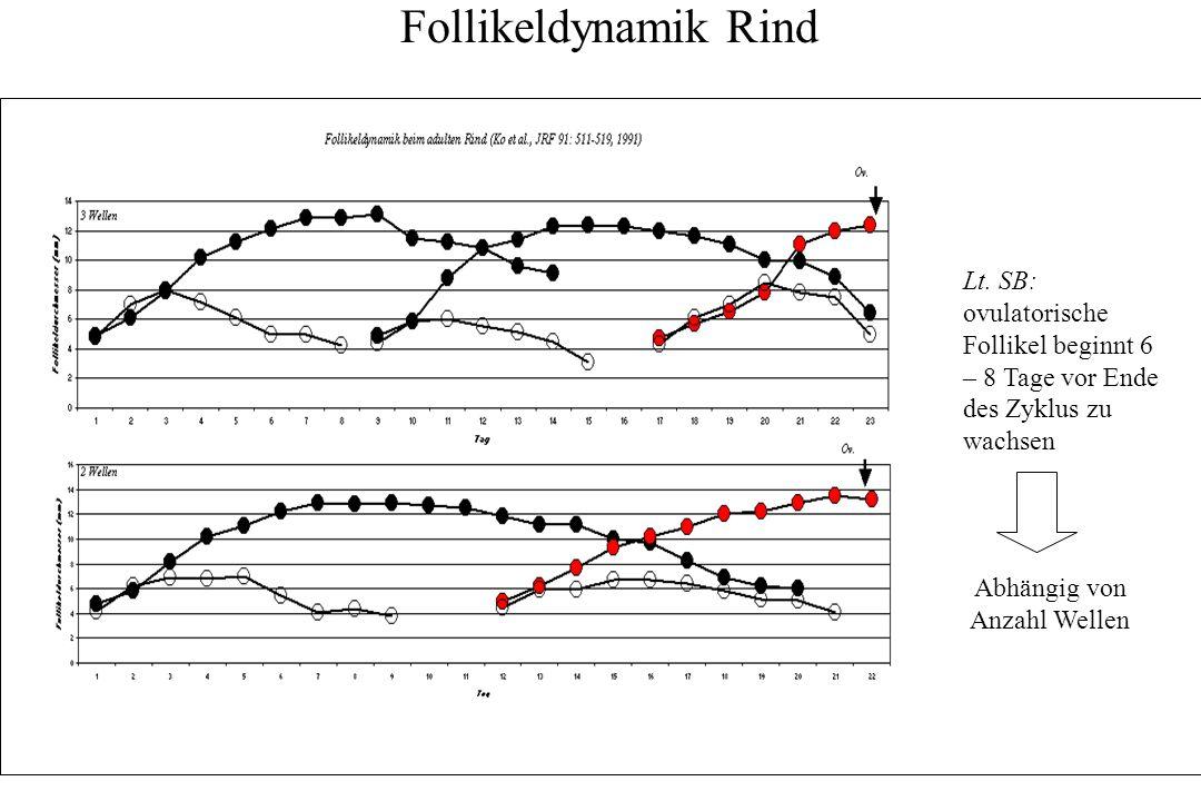 Follikeldynamik und Steuerung beim Rind Zeit Follikeldurchmesser (mm) 8 3 Rekrutierung = 8-15 Follikel beginnen zu wachsen Selektion = Kampf der beiden verbliebenen (größten) Follikel um die Vorherrschaft Dominanz = Sieger
