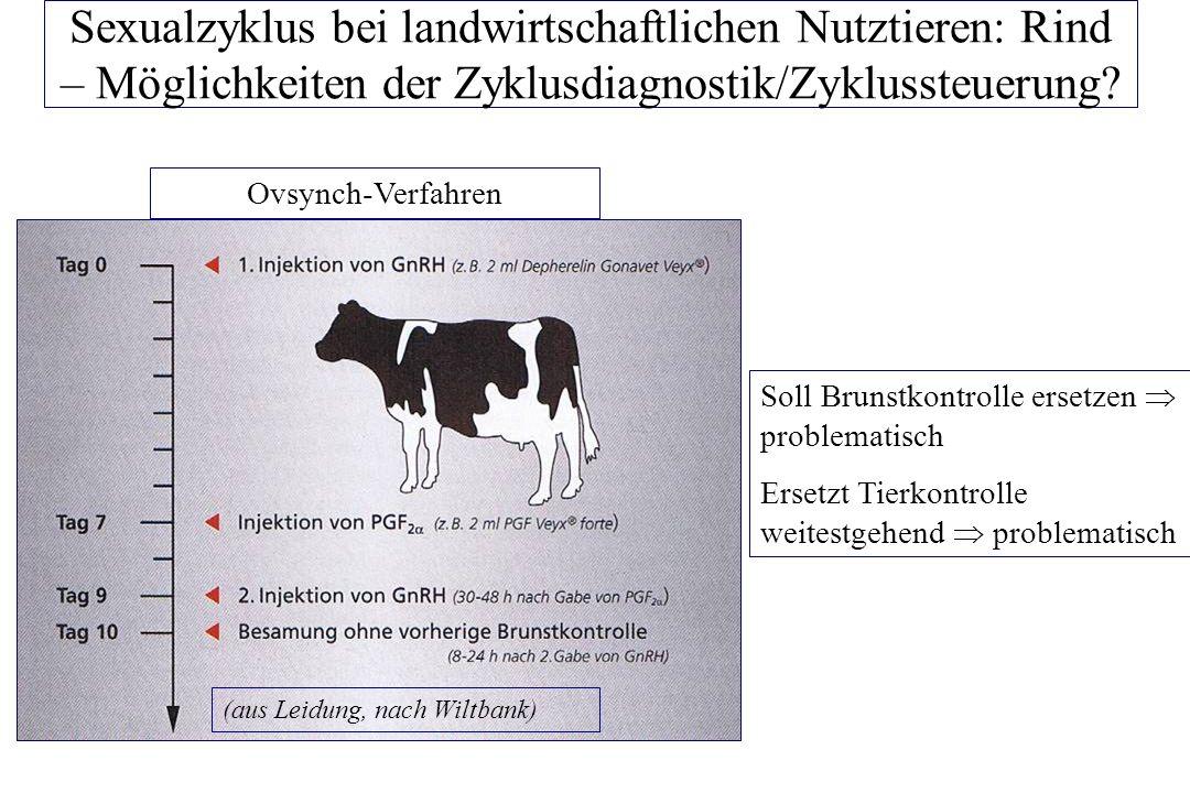 Sexualzyklus bei landwirtschaftlichen Nutztieren: Rind – Möglichkeiten der Zyklussteuerung.
