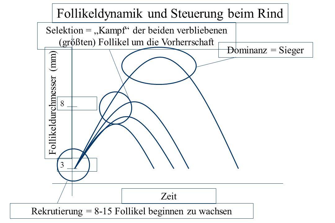 FSH-PeakInhibin Estradiol Follikeldynamik und Steuerung beim Rind – Globale Spieler