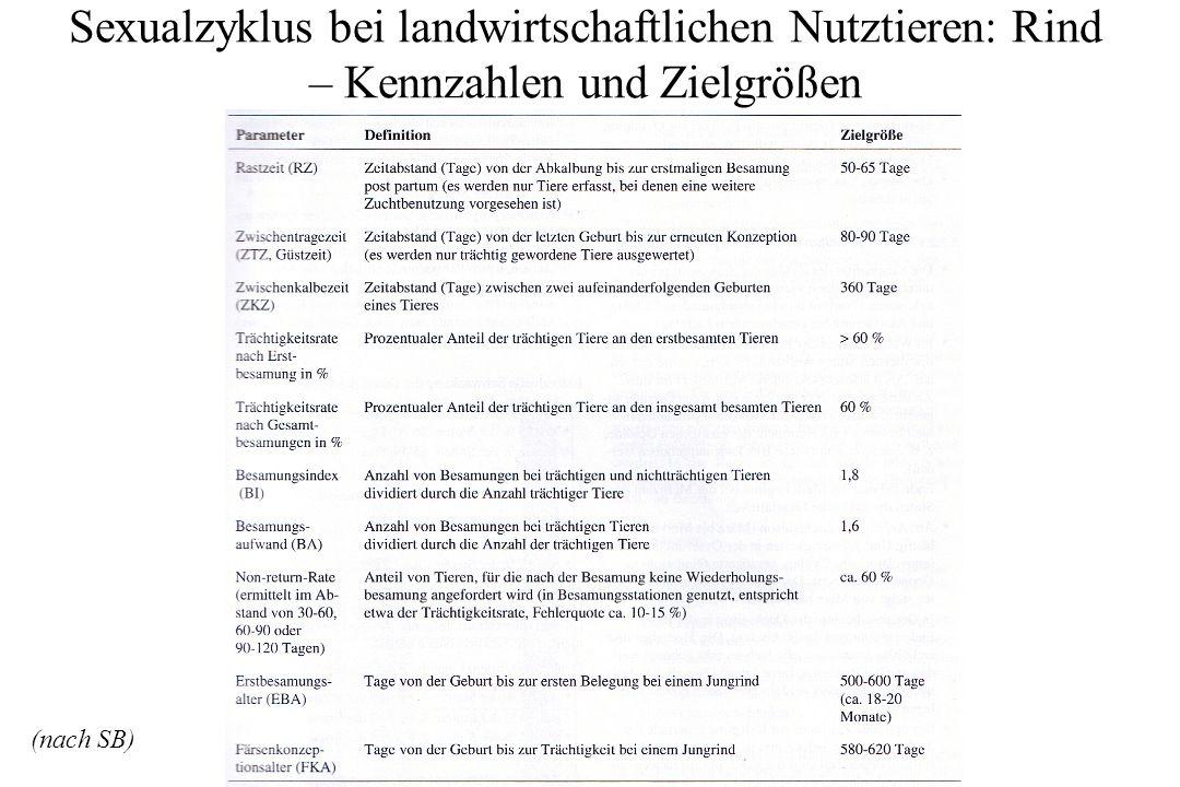 Sexualzyklus bei landwirtschaftlichen Nutztieren: Rind – Kennzahlen und Zielgrößen (nach SB)