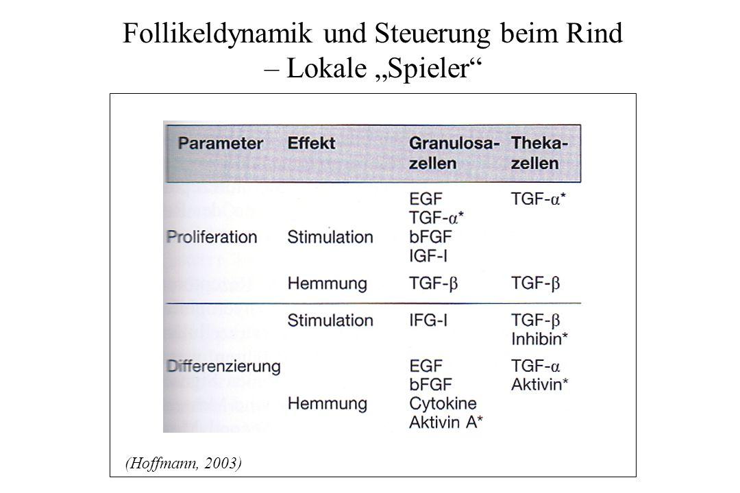 Endokrinologie Rind (nach SB)
