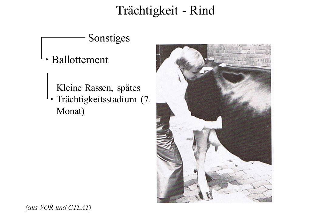 Trächtigkeit - Rind (aus VOR und CTLAT) Sonstiges Ballottement Kleine Rassen, spätes Trächtigkeitsstadium (7. Monat)