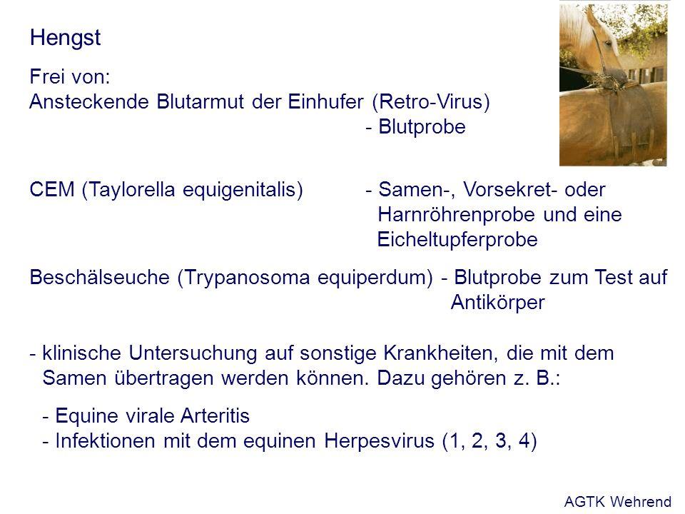 Hengst Frei von: Ansteckende Blutarmut der Einhufer (Retro-Virus) - Blutprobe CEM (Taylorella equigenitalis) - Samen-, Vorsekret- oder Harnröhrenprobe und eine Eicheltupferprobe Beschälseuche (Trypanosoma equiperdum) - Blutprobe zum Test auf Antikörper - klinische Untersuchung auf sonstige Krankheiten, die mit dem Samen übertragen werden können.