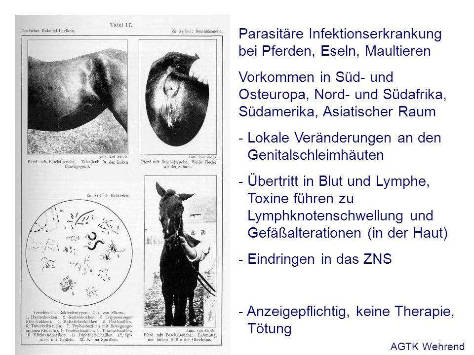 Parasitäre Infektionserkrankung bei Pferden, Eseln, Maultieren Vorkommen in Süd- und Osteuropa, Nord- und Südafrika, Südamerika, Asiatischer Raum - Lokale Veränderungen an den Genitalschleimhäuten - Übertritt in Blut und Lymphe, Toxine führen zu Lymphknotenschwellung und Gefäßalterationen (in der Haut) - Eindringen in das ZNS - Anzeigepflichtig, keine Therapie, Tötung AGTK Wehrend