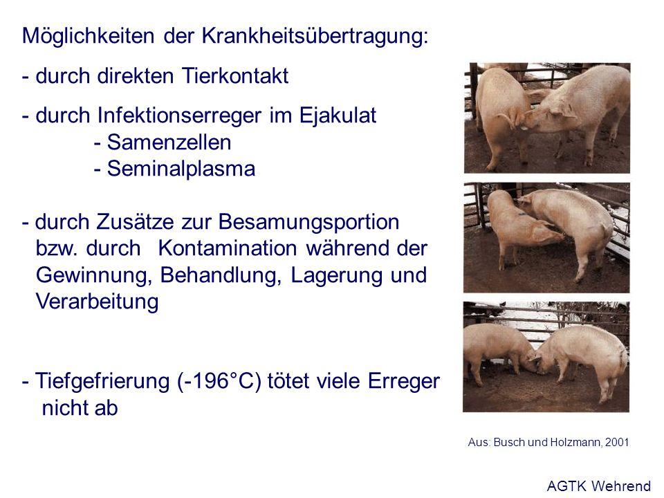 Möglichkeiten der Krankheitsübertragung: - durch direkten Tierkontakt - durch Infektionserreger im Ejakulat - Samenzellen - Seminalplasma - durch Zusätze zur Besamungsportion bzw.