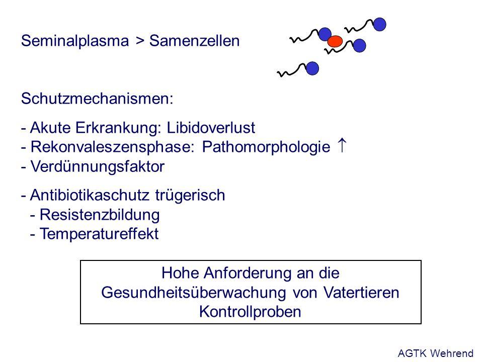 Seminalplasma > Samenzellen Schutzmechanismen: - Akute Erkrankung: Libidoverlust - Rekonvaleszensphase: Pathomorphologie - Verdünnungsfaktor - Antibiotikaschutz trügerisch - Resistenzbildung - Temperatureffekt Hohe Anforderung an die Gesundheitsüberwachung von Vatertieren Kontrollproben AGTK Wehrend