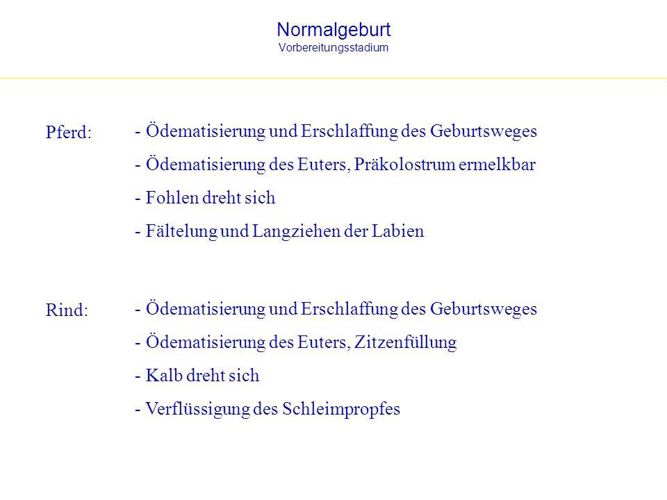 Normalgeburt Vorbereitungsstadium Pferd: - Ödematisierung und Erschlaffung des Geburtsweges - Ödematisierung des Euters, Präkolostrum ermelkbar - Fohl