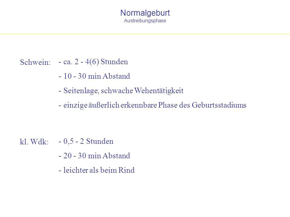Normalgeburt Austreibungsphase Schwein: kl. Wdk: - 0,5 - 2 Stunden - 20 - 30 min Abstand - leichter als beim Rind - ca. 2 - 4(6) Stunden - 10 - 30 min