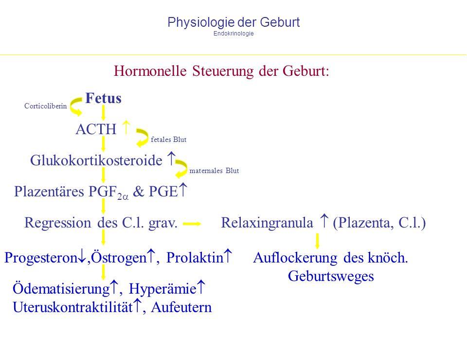 Physiologie der Geburt Endokrinologie Hormonelle Steuerung der Geburt: Fetus ACTH Glukokortikosteroide fetales Blut Plazentäres PGF 2 & PGE Regression