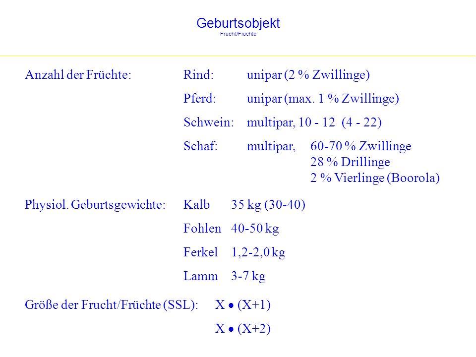 Geburtsobjekt Frucht/Früchte Physiol. Geburtsgewichte:Kalb35 kg (30-40) Fohlen40-50 kg Ferkel1,2-2,0 kg Lamm3-7 kg Größe der Frucht/Früchte (SSL): X (