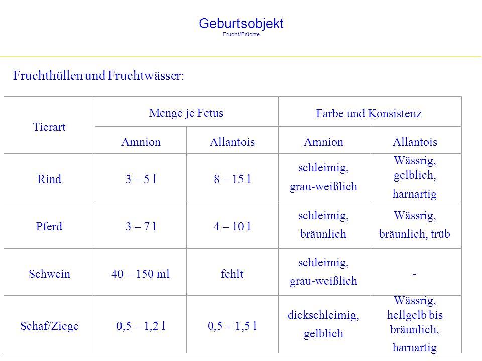 Geburtsobjekt Frucht/Früchte Lage der Früchte während der Austreibungsphase: Vorderendlage: Hinterendlage: Rind (ca.