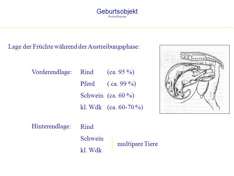 Geburtsobjekt Frucht/Früchte Lage der Früchte während der Austreibungsphase: Vorderendlage: Hinterendlage: Rind (ca. 95 %) Pferd ( ca. 99 %) Schwein (