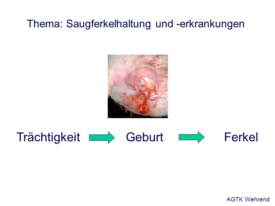 FerkelGeburtTrächtigkeit Thema: Saugferkelhaltung und -erkrankungen AGTK Wehrend