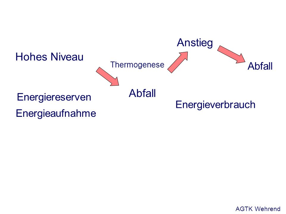 Hohes Niveau Abfall Energiereserven Abfall Anstieg Energieaufnahme Thermogenese Energieverbrauch AGTK Wehrend
