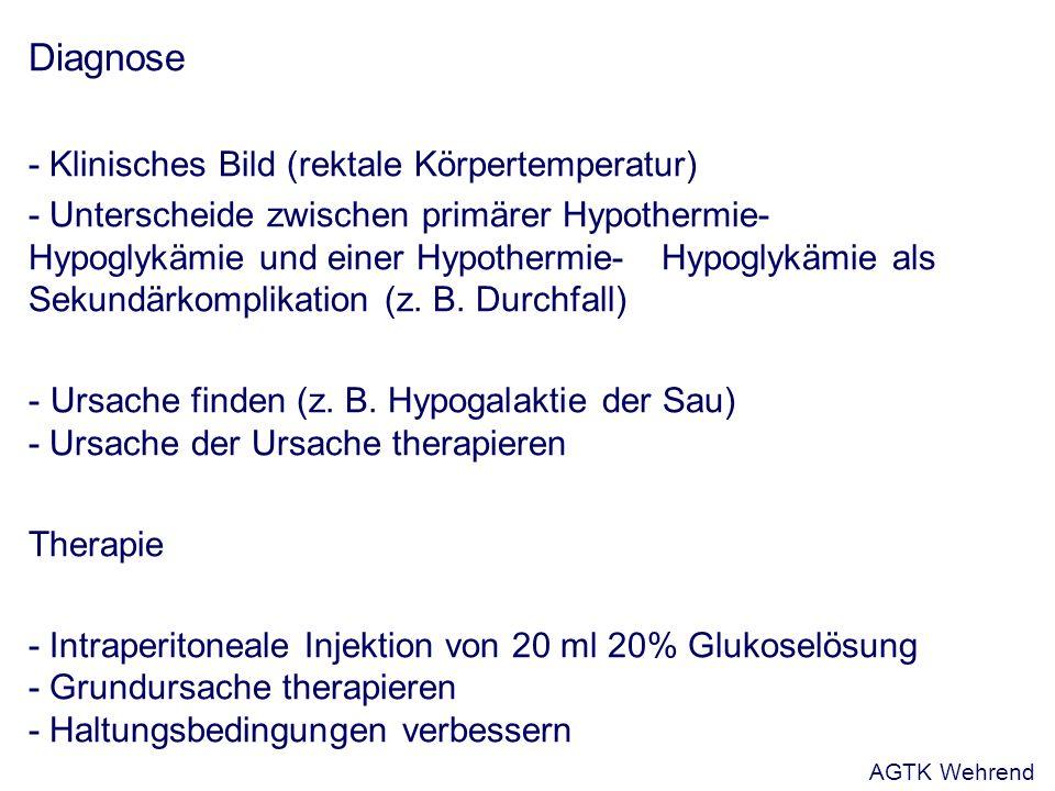 Diagnose - Klinisches Bild (rektale Körpertemperatur) - Unterscheide zwischen primärer Hypothermie- Hypoglykämie und einer Hypothermie-Hypoglykämie als Sekundärkomplikation (z.
