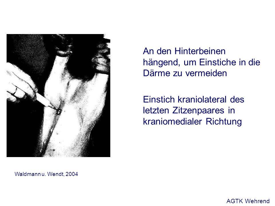 An den Hinterbeinen hängend, um Einstiche in die Därme zu vermeiden Einstich kraniolateral des letzten Zitzenpaares in kraniomedialer Richtung Waldmann u.