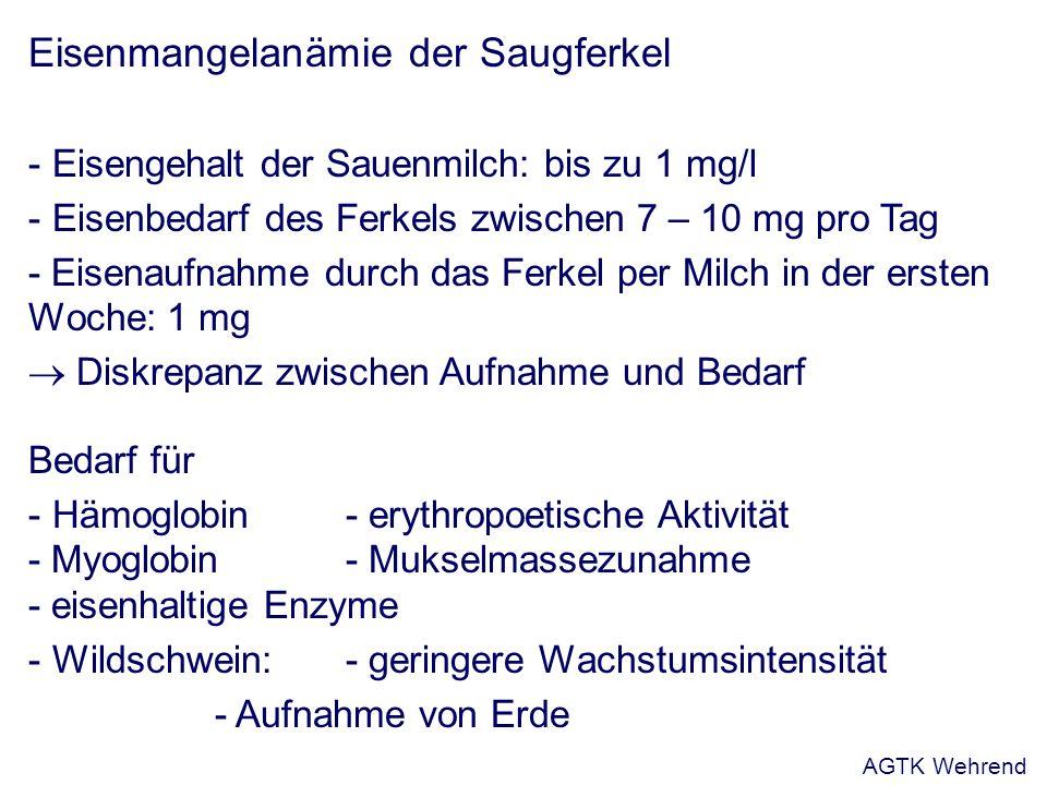 Eisenmangelanämie der Saugferkel - Eisengehalt der Sauenmilch: bis zu 1 mg/l - Eisenbedarf des Ferkels zwischen 7 – 10 mg pro Tag - Eisenaufnahme durch das Ferkel per Milch in der ersten Woche: 1 mg Diskrepanz zwischen Aufnahme und Bedarf Bedarf für - Hämoglobin - erythropoetische Aktivität - Myoglobin- Mukselmassezunahme - eisenhaltige Enzyme - Wildschwein: - geringere Wachstumsintensität - Aufnahme von Erde AGTK Wehrend