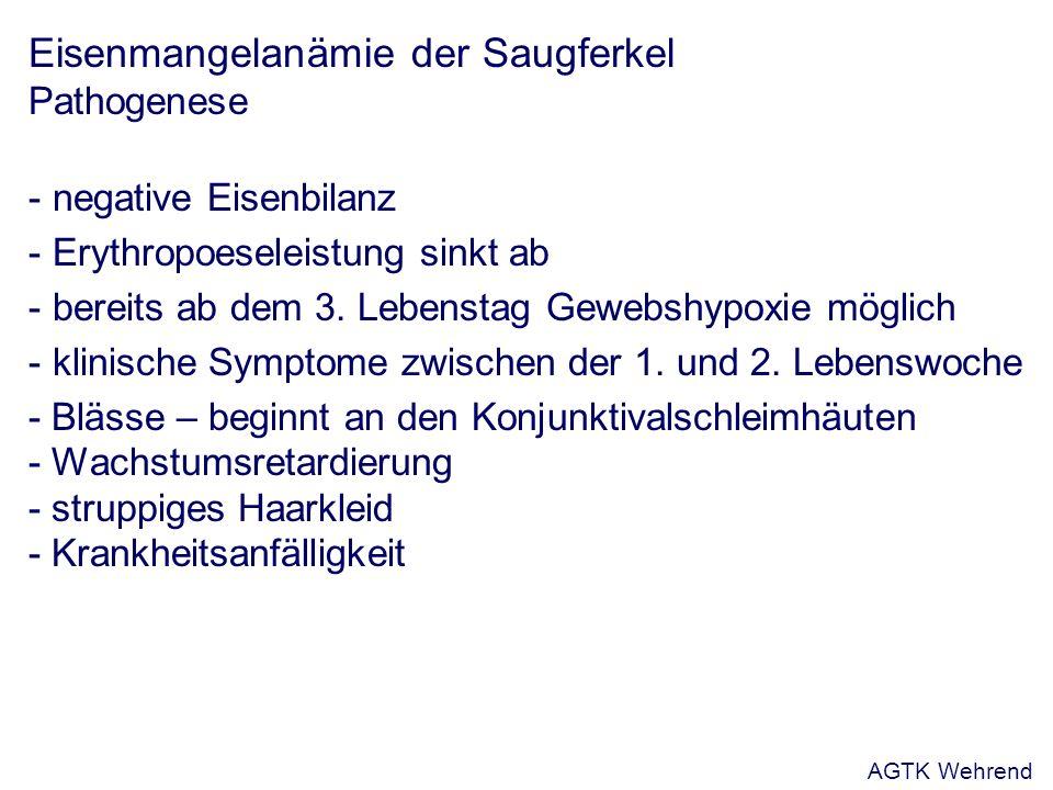 Eisenmangelanämie der Saugferkel Pathogenese - negative Eisenbilanz - Erythropoeseleistung sinkt ab - bereits ab dem 3.