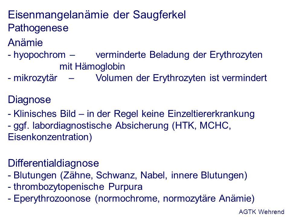 Eisenmangelanämie der Saugferkel Pathogenese Anämie - hyopochrom – verminderte Beladung der Erythrozyten mit Hämoglobin - mikrozytär –Volumen der Erythrozyten ist vermindert Diagnose - Klinisches Bild – in der Regel keine Einzeltiererkrankung - ggf.