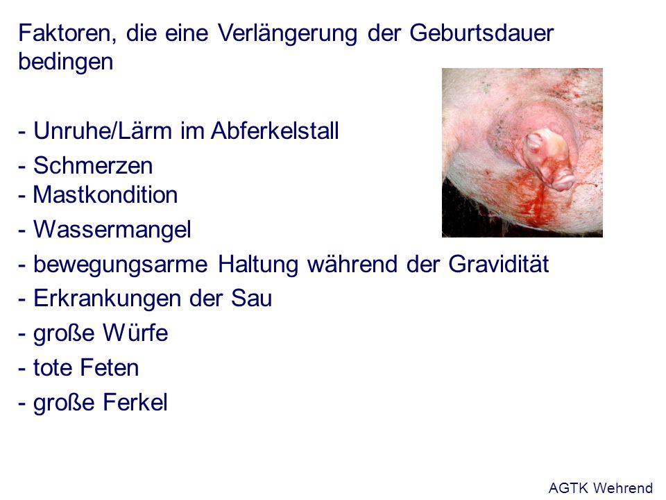 Faktoren, die eine Verlängerung der Geburtsdauer bedingen - Unruhe/Lärm im Abferkelstall - Schmerzen - Mastkondition - Wassermangel - bewegungsarme Haltung während der Gravidität - Erkrankungen der Sau - große Würfe - tote Feten - große Ferkel AGTK Wehrend