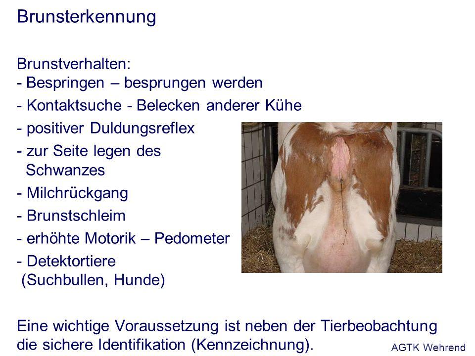 Brunsterkennung Brunstverhalten: - Bespringen – besprungen werden - Kontaktsuche - Belecken anderer Kühe - positiver Duldungsreflex - zur Seite legen des Schwanzes - Milchrückgang - Brunstschleim - erhöhte Motorik – Pedometer - Detektortiere (Suchbullen, Hunde) Eine wichtige Voraussetzung ist neben der Tierbeobachtung die sichere Identifikation (Kennzeichnung).