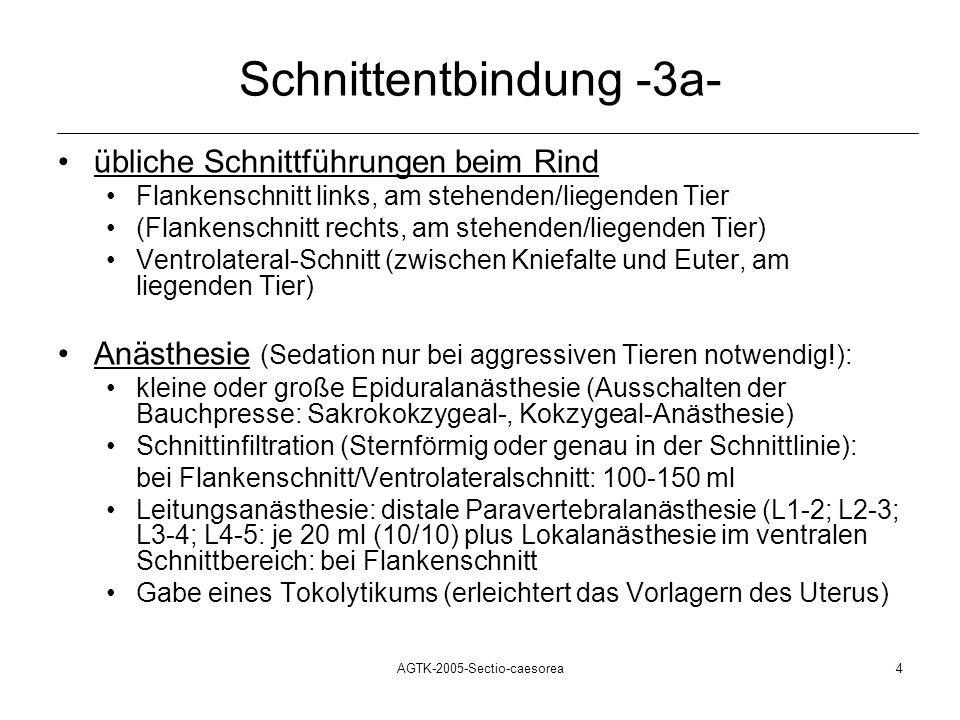 AGTK-2005-Sectio-caesorea4 Schnittentbindung -3a- übliche Schnittführungen beim Rind Flankenschnitt links, am stehenden/liegenden Tier (Flankenschnitt