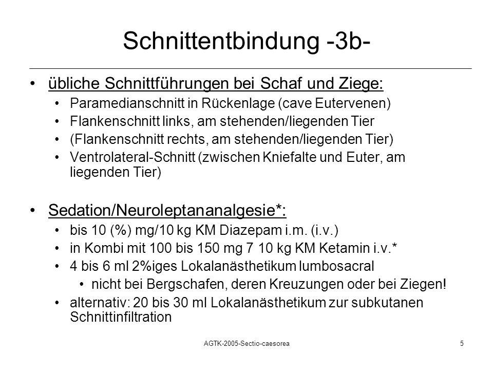 AGTK-2005-Sectio-caesorea5 Schnittentbindung -3b- übliche Schnittführungen bei Schaf und Ziege: Paramedianschnitt in Rückenlage (cave Eutervenen) Flan