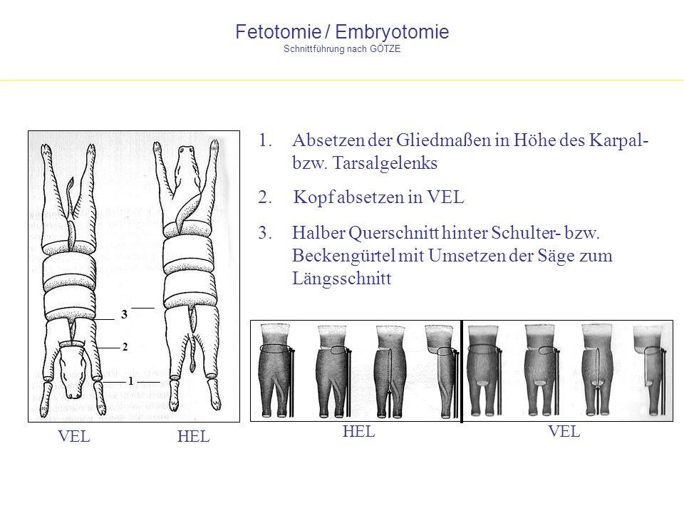 Fetotomie / Embryotomie Schnittführung nach GÖTZE HELVEL HEL 1.Absetzen der Gliedmaßen in Höhe des Karpal- bzw. Tarsalgelenks 1 2. Kopf absetzen in VE