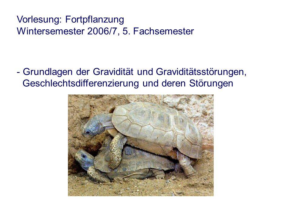 Vorlesung: Fortpflanzung Wintersemester 2006/7, 5.