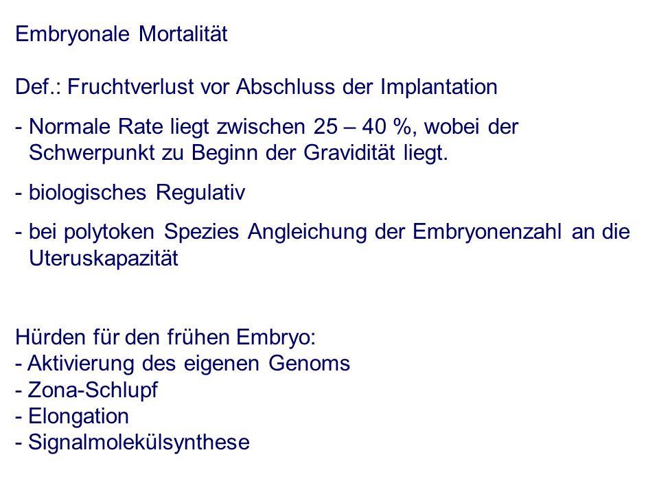 Embryonale Mortalität Def.: Fruchtverlust vor Abschluss der Implantation - Normale Rate liegt zwischen 25 – 40 %, wobei der Schwerpunkt zu Beginn der Gravidität liegt.